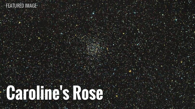Caroline's Rose