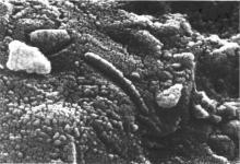 microscopic view of mars meteorite AH84001